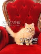 ネコちゃんのオーディション写真