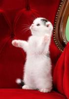 猫ちゃん写真